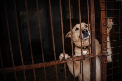 錆びた檻から立ち上がって見つめる犬