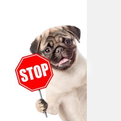 STOPと犬 159316043