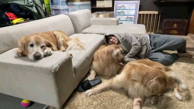 ソファーで寝る犬一匹