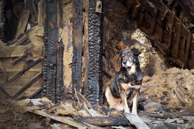 崩れた瓦礫の上に座る犬