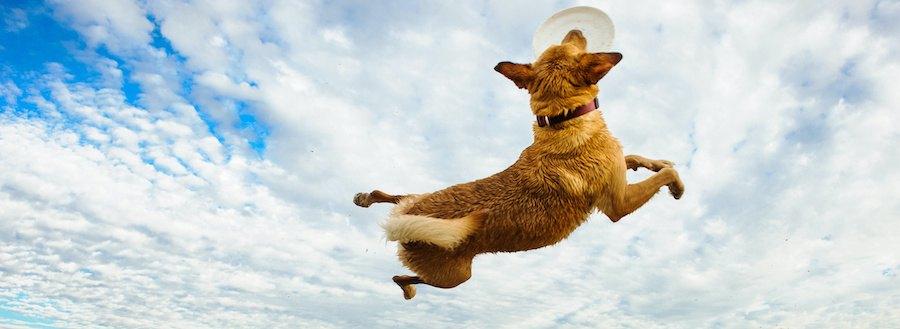 ジャンプする犬と青空