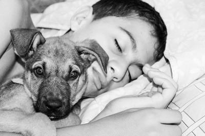 犬と一緒に寝る人