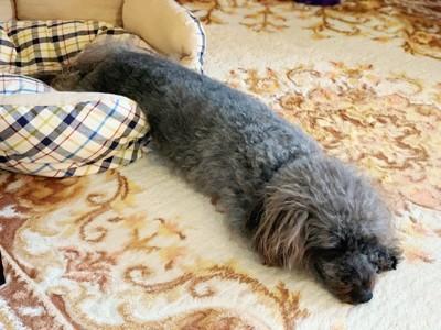 長く伸びて寝ているエマさん