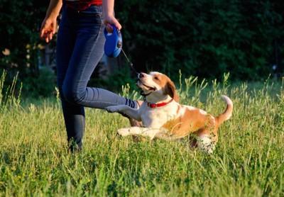 飼い主とお散歩を楽しむ子犬
