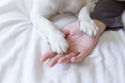 ベッドで寝ている飼い主の手に置かれた犬の前足