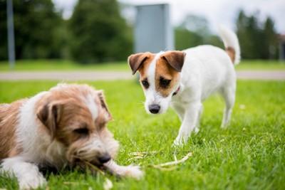 いじけている犬を慰める犬