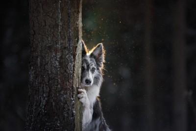 木の陰から覗く犬