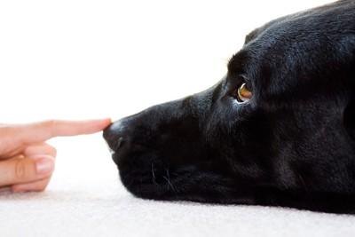 がん探知犬の鼻の頭を指している人