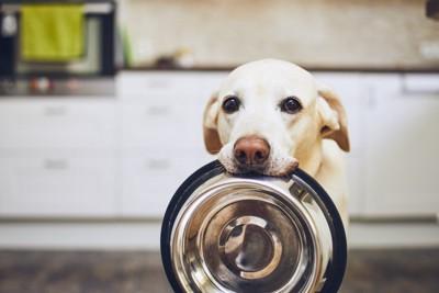 ご飯の容器を咥えてこちらを見つめている犬