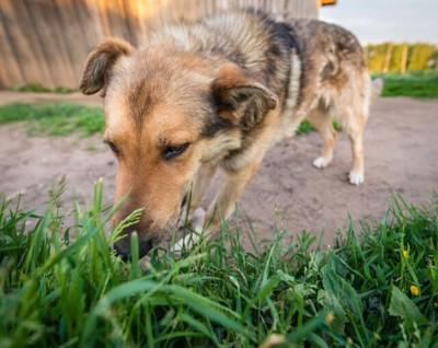 草むらを嗅ぐ犬
