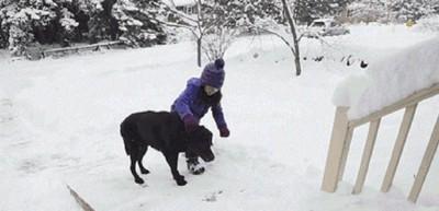 スロープを上る犬