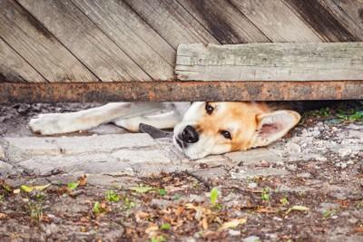 床下に潜る犬