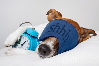 目覚まし時計を抱える犬