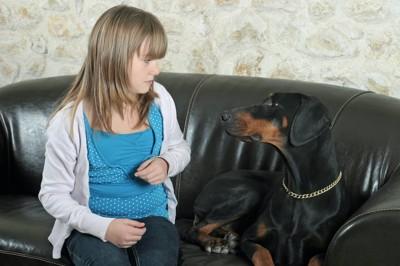 ソファーで女の子と見つめ合うドーベルマン