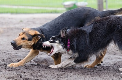 喧嘩をしている犬