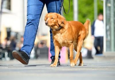 散歩する若い女性と犬