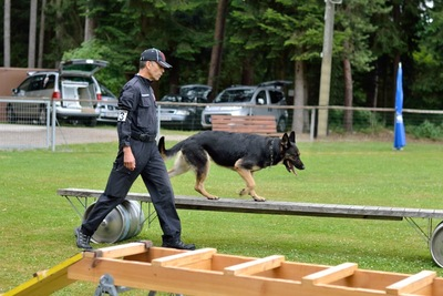 障害物を渡る警察犬