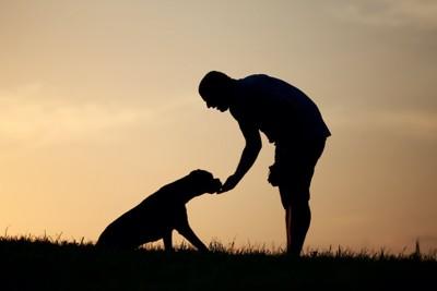男性の手からおやつを食べる犬のシルエット