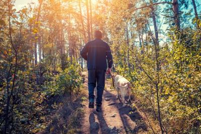 オンリードで森の中を散歩する男性と犬