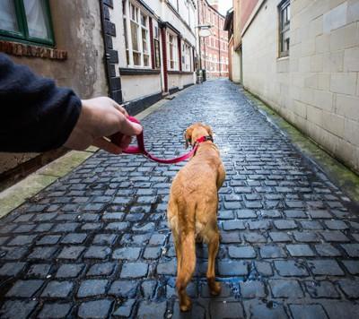 リードの端を持って散歩する人と犬
