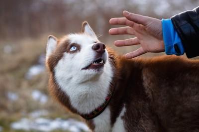 後ろから触られそうになって驚いている犬