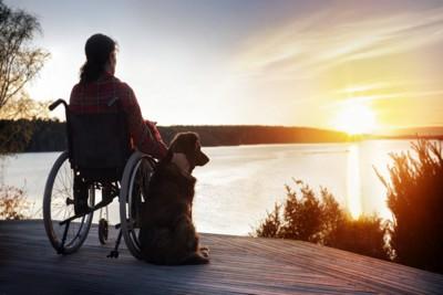 車椅子の飼い主に寄り添う補助犬のラブラドール