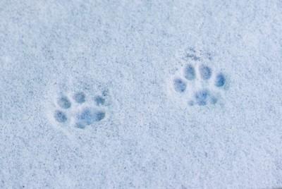 雪についた肉球の跡