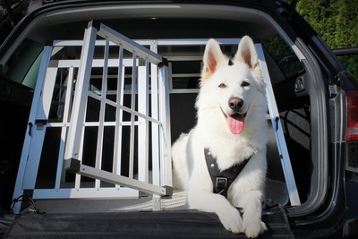 車の後ろから顔を出す犬