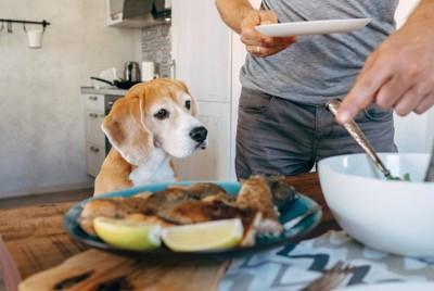 魚料理を見ている犬