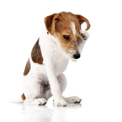 前足で顔を掻く犬