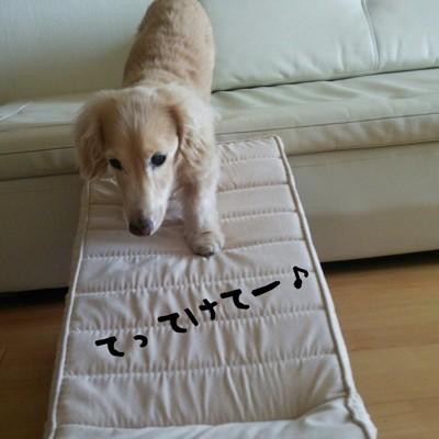 スロープを降りる犬