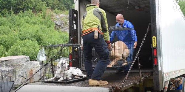 ケージの犬を運搬