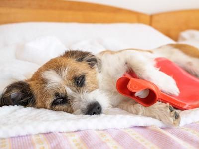 赤い湯たんぽを抱えている犬