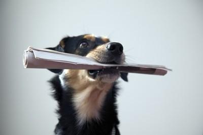 丸めた紙をくわえている犬