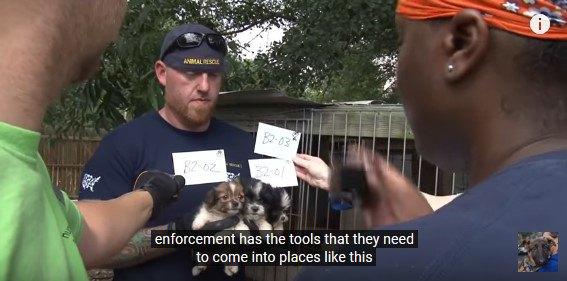 保護した犬の記録