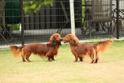ドッグランの犬たち