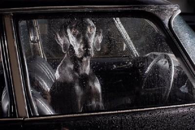 車の中に大きな黒い犬