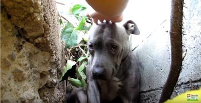人の手を頭にのせる犬