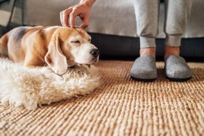 眠そうな犬と撫でる人