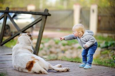 指さしている子どもと大型犬