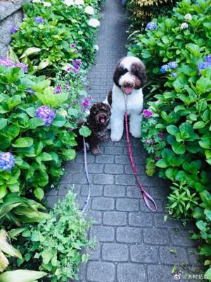 工藤静香宅の2匹の犬
