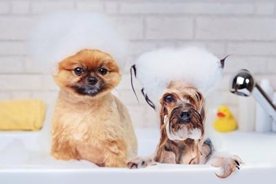 シャンプー中の犬たち