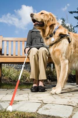 仕事中の盲導犬