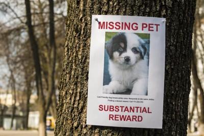迷子の犬のポスター