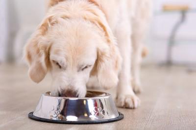 ステンレスの器で食事をする犬