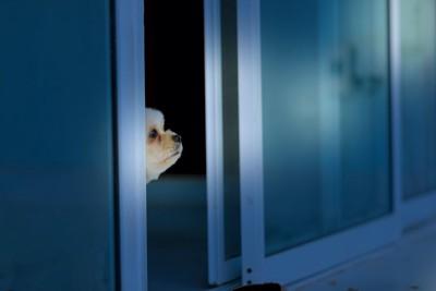 開いた扉から顔を出す犬