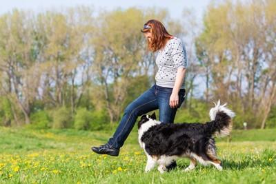 飼い主の足の間を犬がくぐっている写真