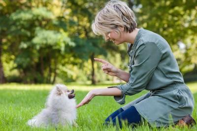 子犬にしつけをしている女性