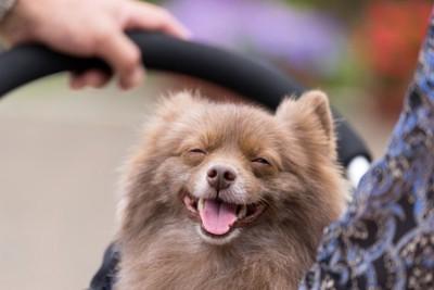 人々に可愛がられる犬