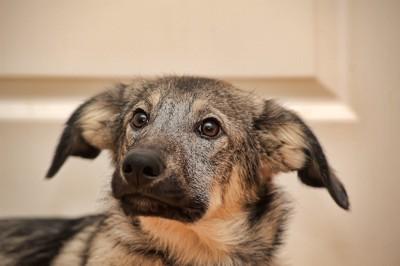 悲しそうな表情の犬